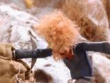 Боцман и попугай №5 (1986)